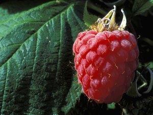 Close-up of a raspberry