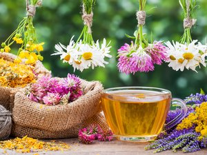 Healing herbs, bags with dried plants and cup of tea