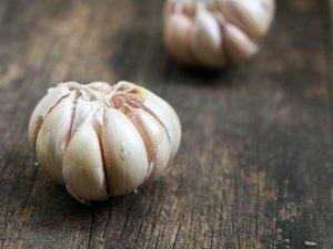 Closeup garlic