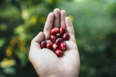 Close-Up Of Hand Holding Red Berry Fruits