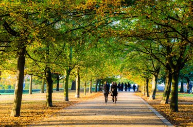 Rear View Of People Walking On Road At Park In Autumn