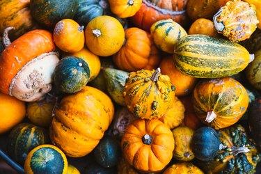 High angle view of various pumpkins