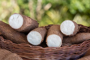Fresh Cassava root on wooden table with blurred garden background. Copy space.