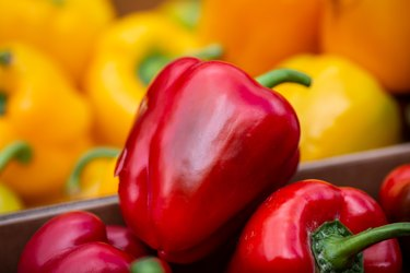 Bell Peppers For Sale