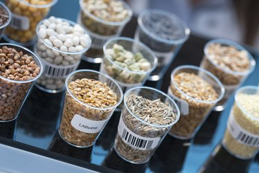 GMO seeds and cereals in food safety laboratory