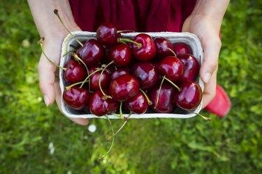 Girls hands dress holding cardboard box of cherries, close-up