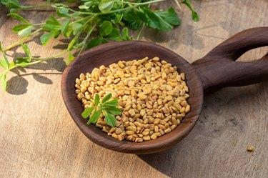 Fenugreek seeds on a spoon with fresh Trigonella foenum-graecum plant