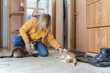 woman wearing yellow rain jacket playing with two cats on the floor