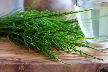 Fresh horsetail on a wooden table