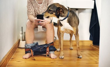 Dog sitting beside his owner texting on her phone while going to the bathroom