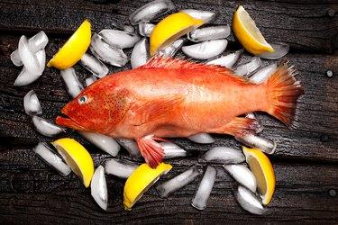 mercury-rich orange grouper on ice