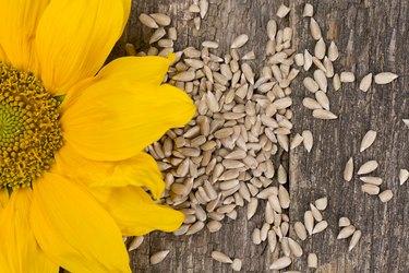 omega-6 rich sunflower seeds