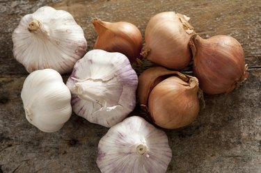 Fresh raw whole garlic bulbs and onions, as a toothache remedy