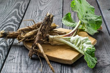 The roots and leaves of burdock on a board