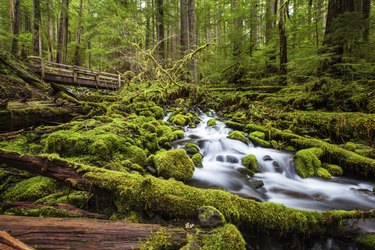 Beautiful cascade waterfall in Sol Duc falls trail