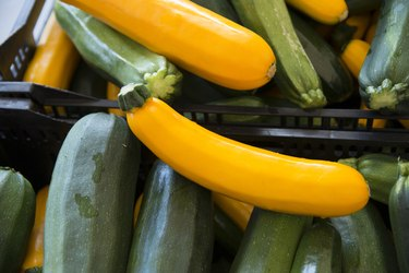 Close-up of Zucchini vegetable, Kenora, Ontario, Canada