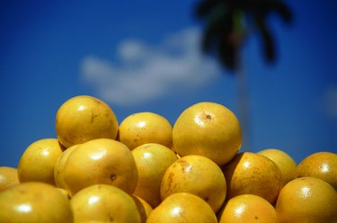 Grapefruits against blue sky, focus on foreground