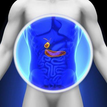 Medical X-Ray Scan - Gallbladder Pancreas