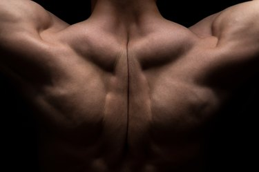 Photo of man's muscle back
