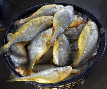Basket with Yellow Croakers