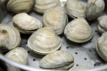 Clams cooked in steamer