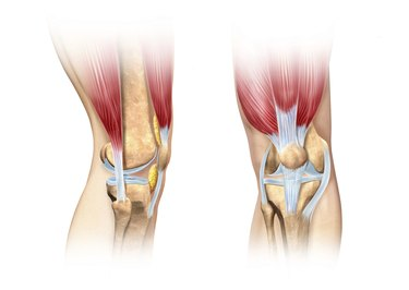 Human knee cutaway illustration. Anatomy image.