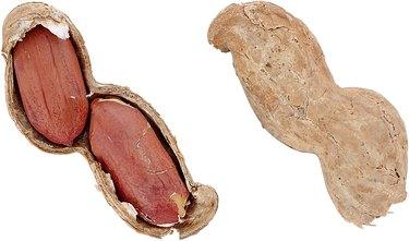 a closeup shot of two peanuts inside a shell