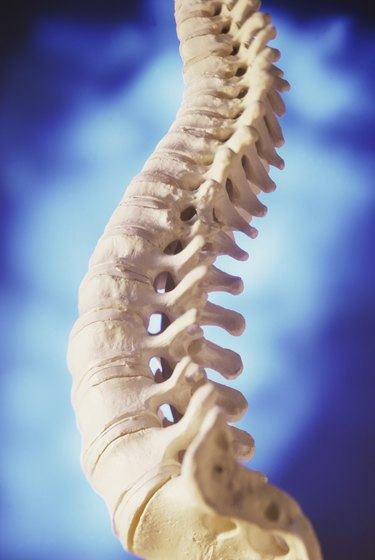 Close-up of a human spine