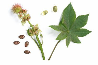 Blossom and leaf of the castor plant
