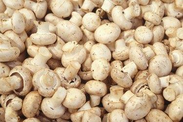 Mushrooms, (Close-up)