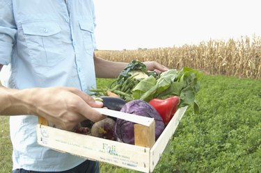 Young man carrying box of vegetables, outdoors, mid section