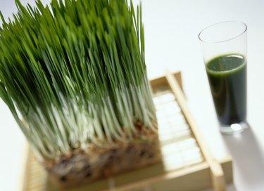 Wheatgrass Plant near a Wheatgrass Drink