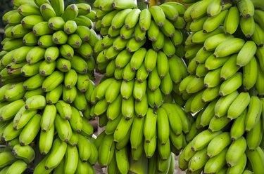 Bananas in Brazil