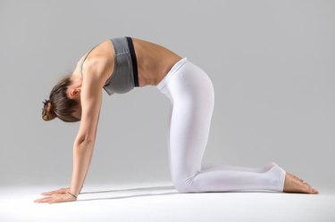 Young attractive woman practicing yoga, standing in asana paired with Cow Pose on the inhale, Cat exercise, Marjaryasana pose, working out in sportswear, indoor full length, grey studio background