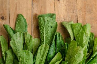 Fresh Green Chinese Cabbage, Pok Choi or Pak Choi