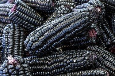 Peruvian purple corn, mainly used to prepare juice (chicha)