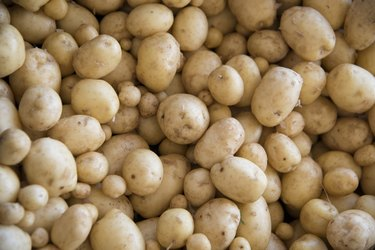 Close-up of potatoes, Kenora, Ontario, Canada