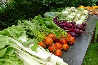 fresh vegetables from the garden oa a garden table