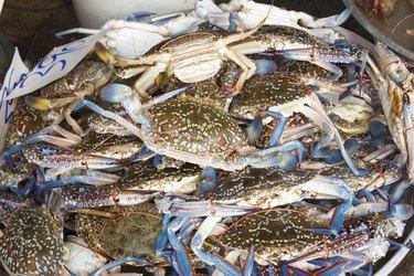 raw crab at seafood market