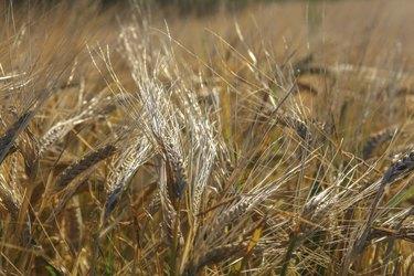 Getreide-1