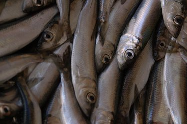 Pile of anchovies