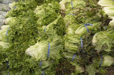 Close-up of lettuce in a supermarket