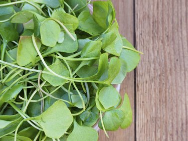 Watercress on wooden background