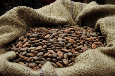 Cocoa beans in the bag
