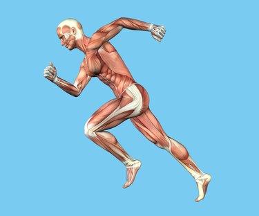 Anatomy of Man in Running Sprint Motion