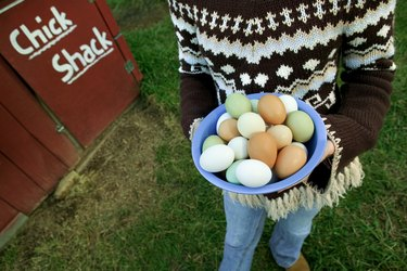 Close-up of a girl holding a plate full of fresh eggs near the ?chick shack?.