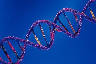 Model of DNA double helix