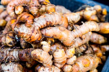 Heaps of freshly harvested turmeric roots