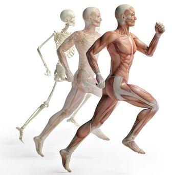 male anatomy running