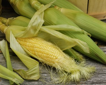 Close-up of corn on the cob